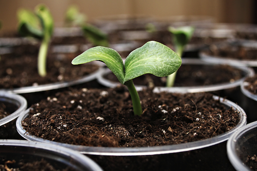 Get your garden ready for summer! Tips on how to start your seeds while it's still winter.