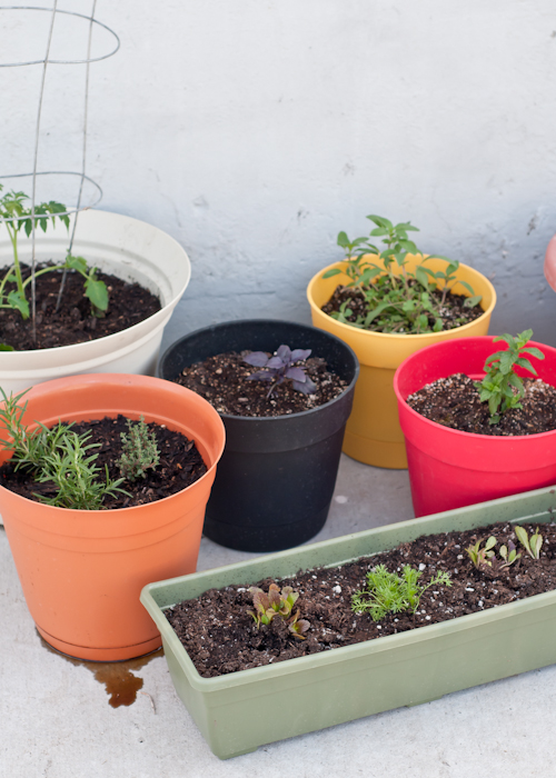 7 Secrets to Planting a Successful Container Garden.  |   Design Mom