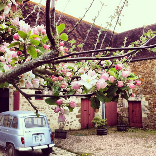 apple blossoms at a French farmhouse