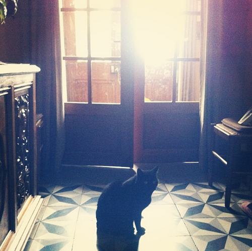 cat in the entry