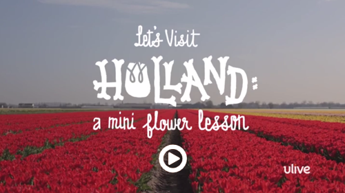 holland title