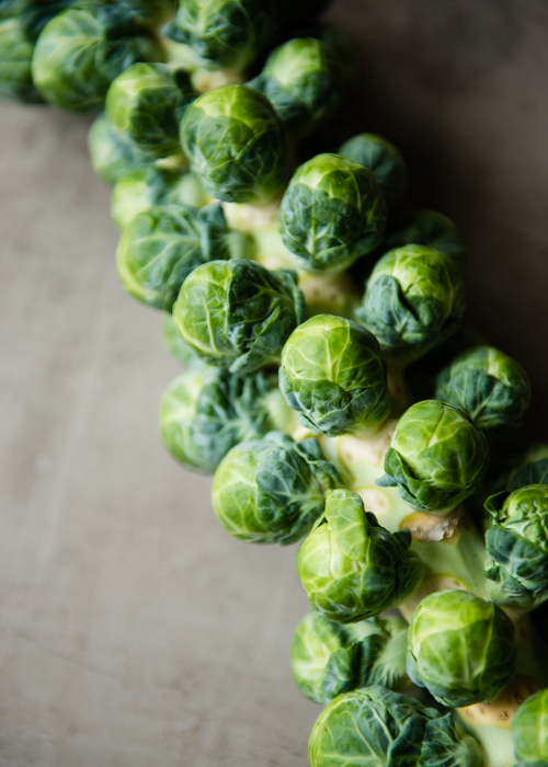 Brussels Sprouts Stalk | Design Mom