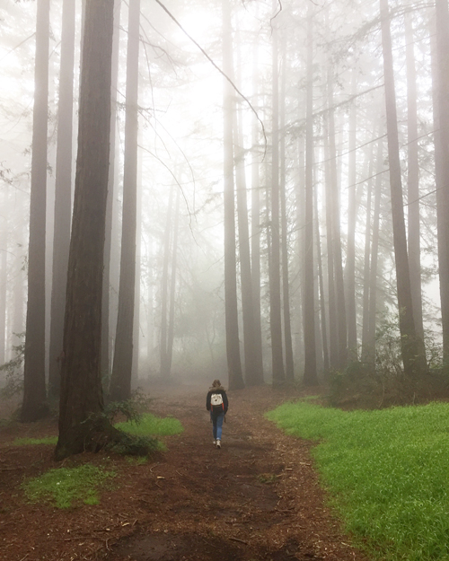 fog-redwoods-forest
