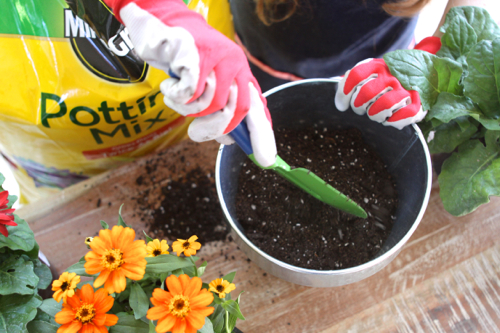 miracle-gro-potting-mix12
