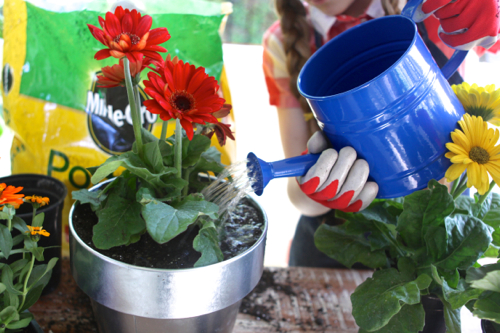 miracle-gro-potting-mix21