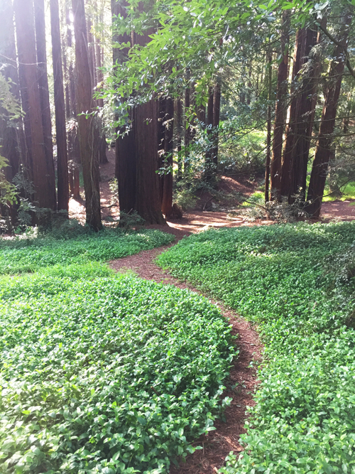 green path redwoods