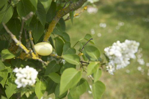 easter egg in tree