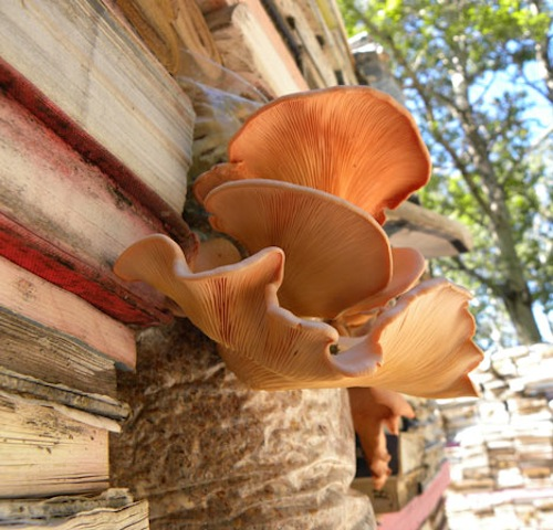 Jardin de la Connaissance mushrooms