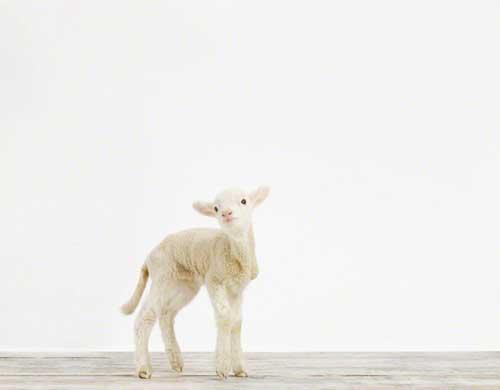 Baby Animals Boost Productivity ⋆ Design Mom
