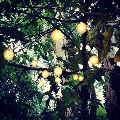 Solar Christmas Trees