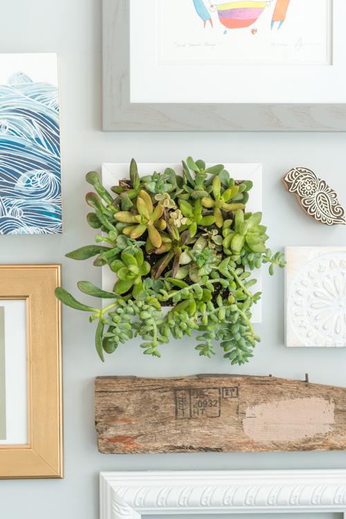 succulent-frame 15