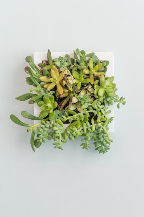 succulent-frame 16