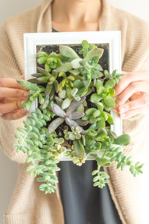 succulent-frame 25
