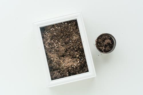 succulent-frame 8